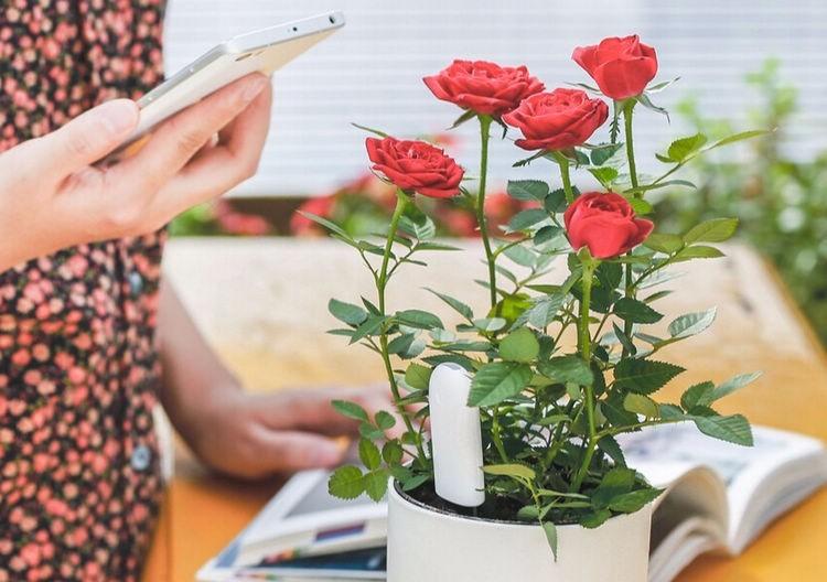 International version xiaomi mi flora monitora czujnik światła inteligentny tester cyfrowy kwiat trawy opieki gleby wody dla roślin ogrodowych 10