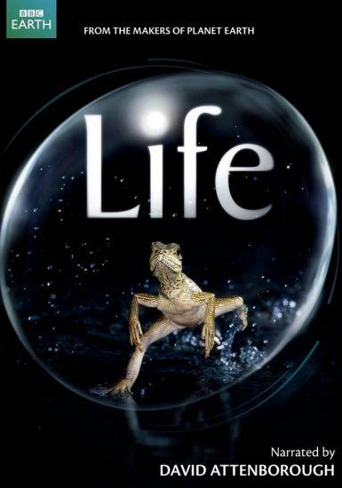 生命全集 2009BBC高分纪录片 HD720P 迅雷下载
