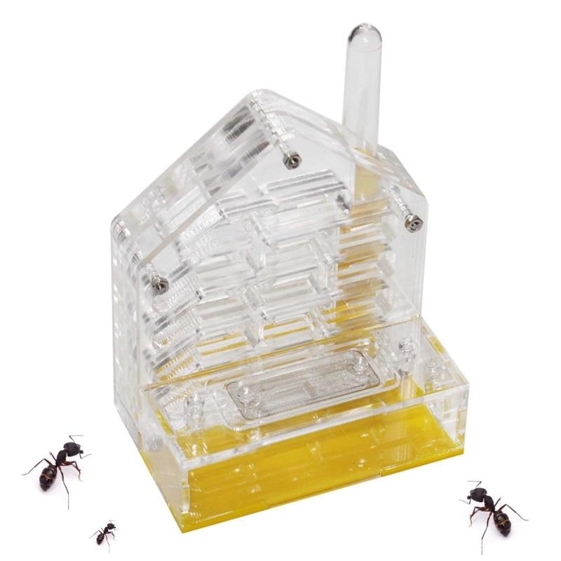 formicário formigas pet house b0kb