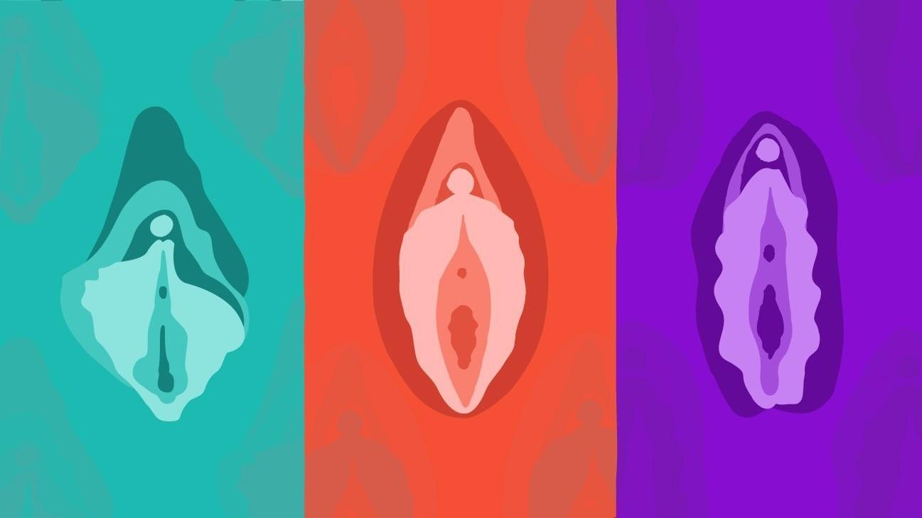 两性知识:关于女性的阴蒂罩的知识,认识阴蒂